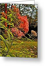 Joe-pye-weed Near Schroon River In New York Greeting Card