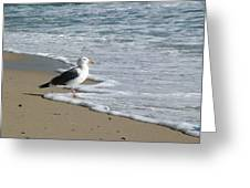 Jonathan Seagull Greeting Card