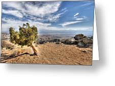 Joshua Tree 39 Greeting Card