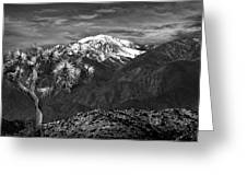 Joshua Tree At Keys View In Black And White Greeting Card