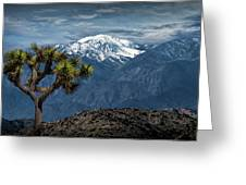 Joshua Tree At Keys View In Joshua Park National Park Greeting Card