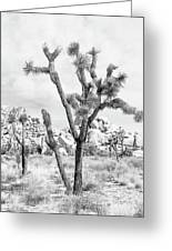 Joshua Tree Branches Greeting Card