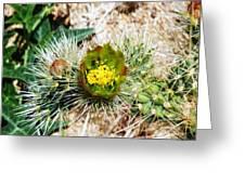 Joshua Tree Cactus Bloom II Greeting Card