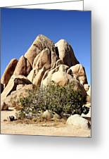 Joshua Tree Center Greeting Card