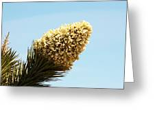 Joshua Tree Cone Greeting Card