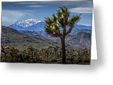 Joshua Tree In Joshua Park National Park With The Little San Bernardino Mountains In The Background Greeting Card