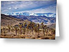 Joshua Tree National Park 2 Greeting Card