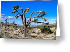 Joshua Tree National Park Winter's Day Greeting Card