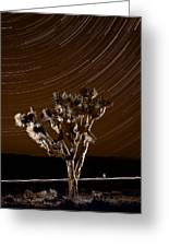 Joshua Tree Night Lights Death Valley Bw Greeting Card