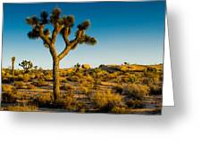 Joshua Tree Panoramic Greeting Card