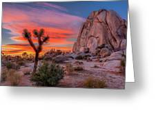 Joshua Tree Sunset Greeting Card by Peter Tellone
