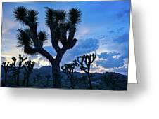 Joshua Tree Sunset Skies Greeting Card