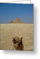 Journey Into The Desert Greeting Card
