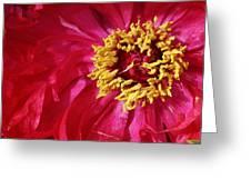 Joy In The Garden Greeting Card