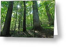 Joyce Kilmer Forest Greeting Card