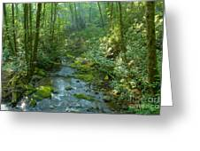 Joyce Kilmer Memorial Forest Greeting Card