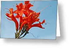 Joyful Bunch Greeting Card
