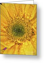 Joyful Color Nature Photograph Greeting Card