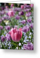 Joyful Tulip Greeting Card