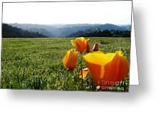 Jubilant Poppies Greeting Card