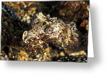 Juevinile Giant Cuttlefish Hiding Greeting Card by James Forte