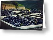 Juicy Grapes Of Autumn. Rotwein Wanderweg Greeting Card