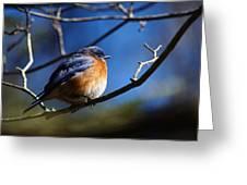 Juicy Male Eastern Bluebird Greeting Card