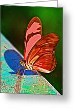 Julia Heliconian Butterfly In Iguazu Falls National Park-brazil Greeting Card