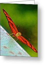 Julia Heliconian Butterfly Spreading Its Wings In Iguazu Falls National Park-brazil  Greeting Card