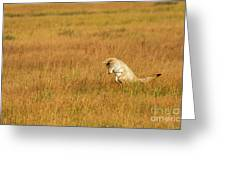 Jumping Coyote Greeting Card