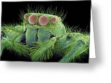 Jumping Spider, Sem Greeting Card by Susumu Nishinaga