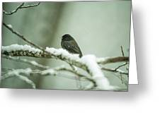 Junco In New Fallen Snow Greeting Card