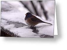 Junco Greeting Card