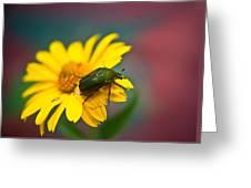 June Beetle Greeting Card