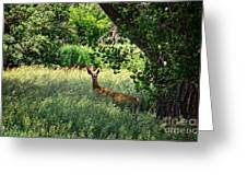 June Doe In Tall Grass Greeting Card