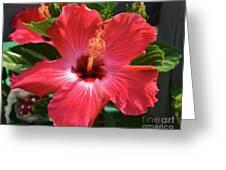 June Morning Hibiscus Greeting Card