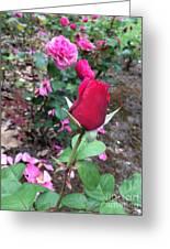 June Rose #2 Greeting Card