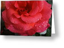 June  Rose  Greeting Card