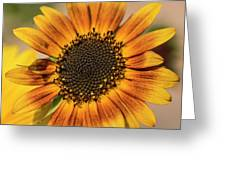 June Sunflowers #2 Greeting Card
