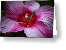 Junes Hibiscus 1 Greeting Card