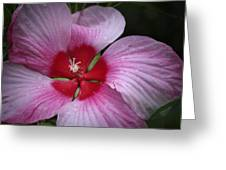Junes Hibiscus 2 Greeting Card