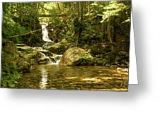 Jungle Appeal Greeting Card