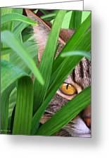 Jungle Cat Greeting Card by Bob Nolin