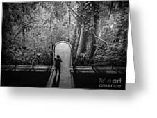 Jungle Entrance Greeting Card