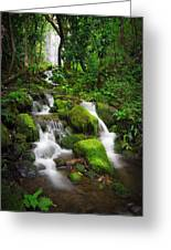 Jungle Falls Greeting Card