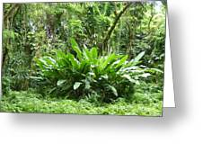 Jungle Fronds Greeting Card