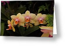 Jungle Orchids Greeting Card