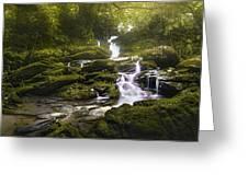 Jungle Riverflow Scene Greeting Card