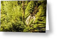 Jungle Steams Greeting Card