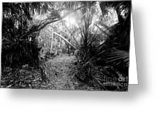 Jungle Trail Greeting Card